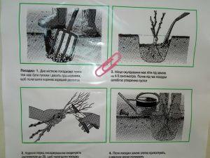 Как можно купить фасовочные пакеты оптом Chernigov Package Photo 0
